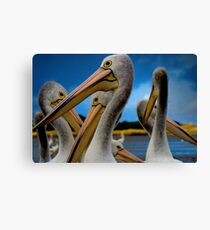 pelicans Canvas Print