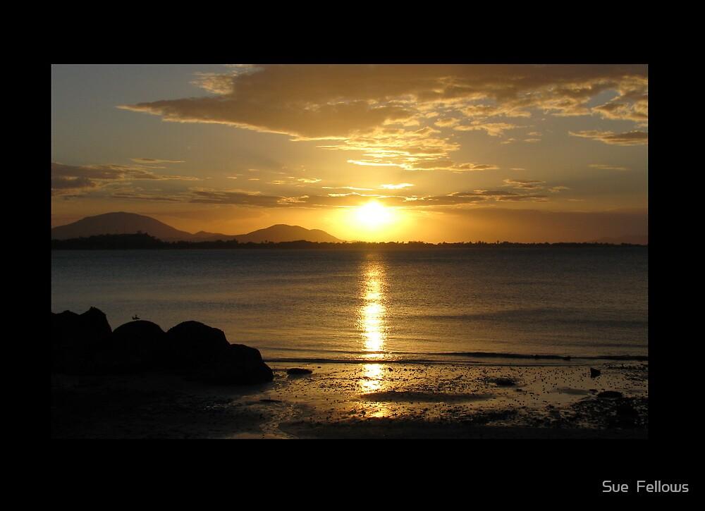 """""""Sun Beams"""" by Sue  Fellows"""
