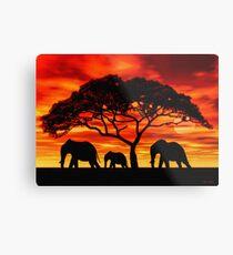 Lámina metálica Acacia Elephant Sunset