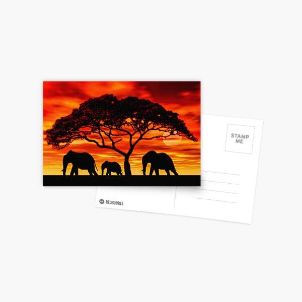 Acacia Elephant Sunset Postcard