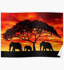 Akazien-Elefant-Sonnenuntergang Poster