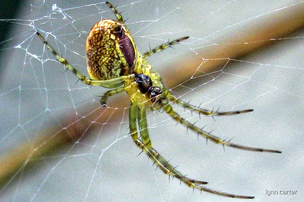 Green Spider by lynn carter