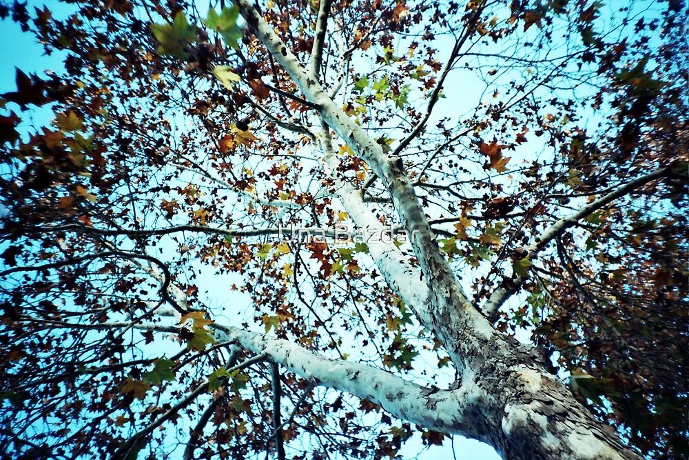 autumn's coming by Una Bazdar