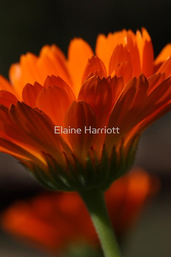 Flames Of Beauty by Elaine Harriott