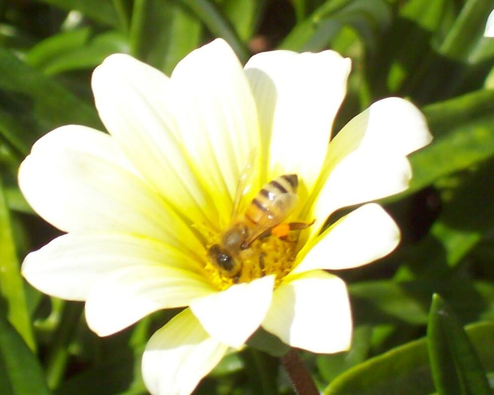 Big Bee by footyman