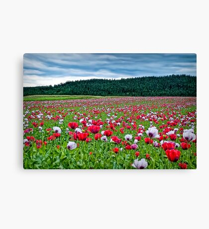 The field Canvas Print