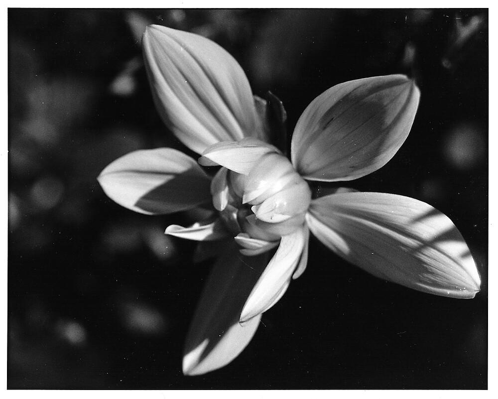 Flower by Haley Higgins