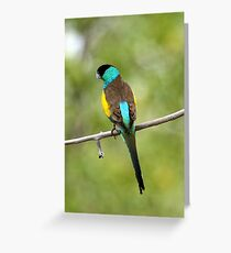 Hooded Parrot Greeting Card