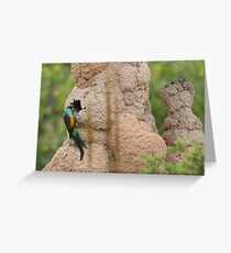 Hooded Parrot at nest Greeting Card
