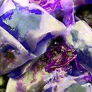 Purple Kelp by GImages