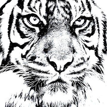 Tigre enojado de NoraMohammed