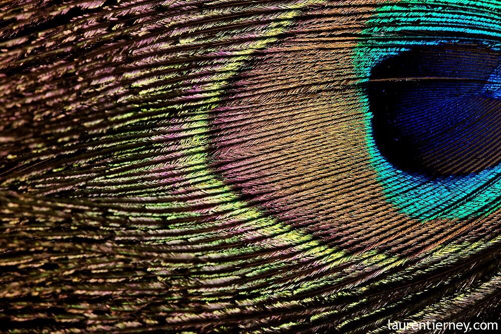 Peacock by Lauren  Tierney