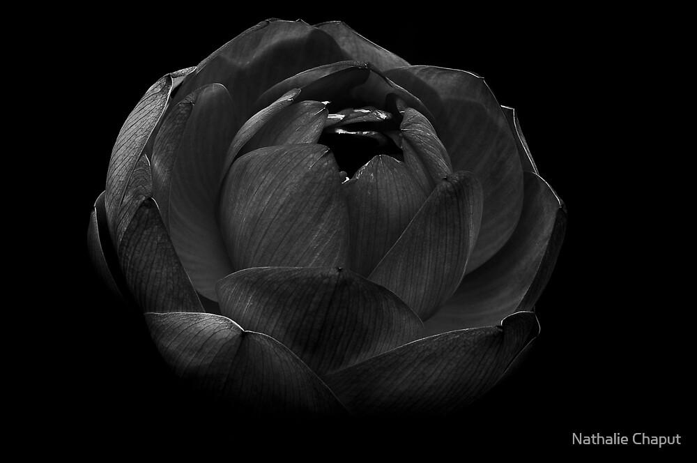 Flower - B&W by Nathalie Chaput
