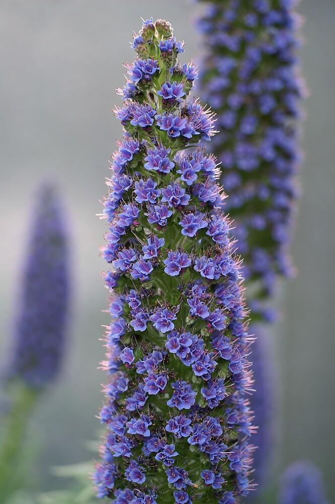 Flowers by Patricia Elliott