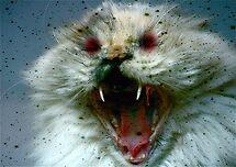 Willow Vampire Cat by autumnwind