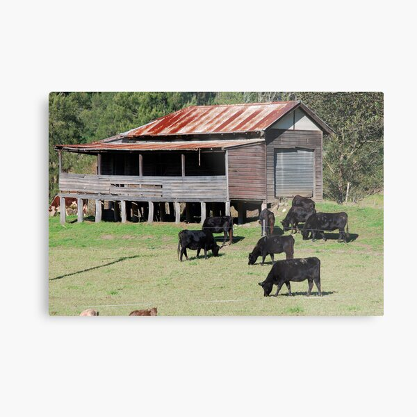 Bliss on the Paterson River Metal Print