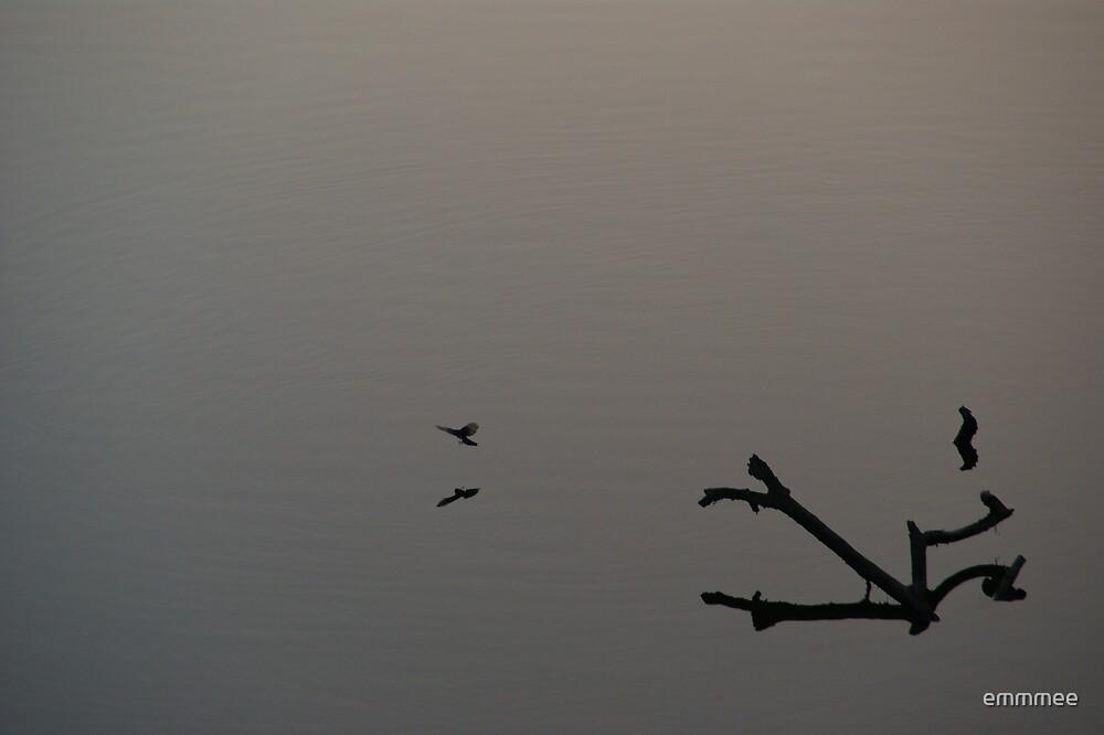 Flying Low (Best viewed Large) by emmmee