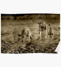 three kangaroos in sepia Poster