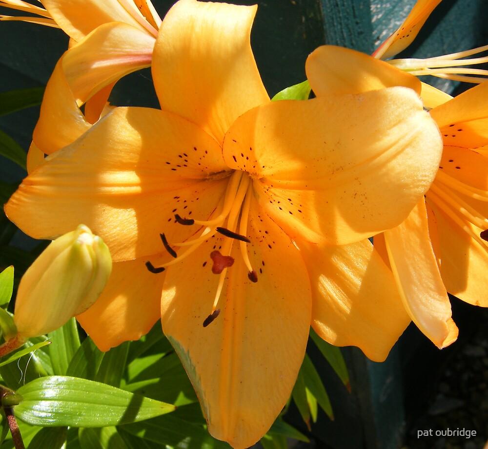 Sunshine Lilies by pat oubridge