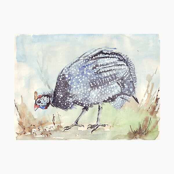 Listen to the Guinea Fowl Photographic Print