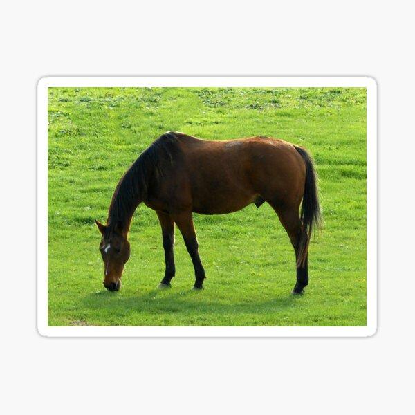 "A Horse Called ""Teddy"" Sticker"
