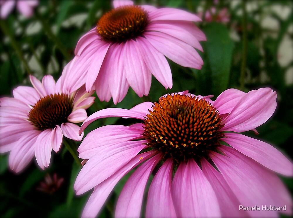 Cone Flower by Pamela Hubbard