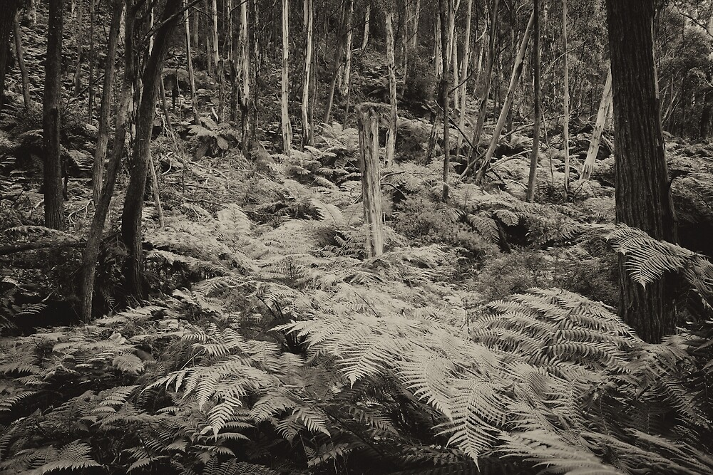 Fern Gully Revisited mono by Geoff Smith