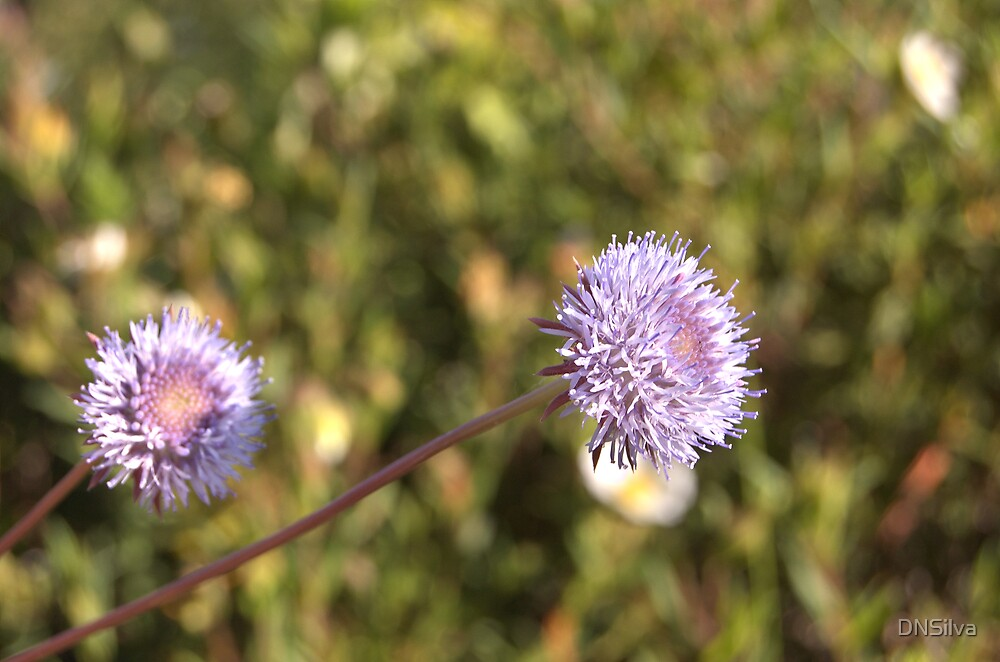 Flower by DNSilva