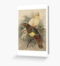 Two Kaka Parrots Greeting Card