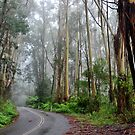 Misty Road to Mt Irvine NSW Australia by Phil Woodman