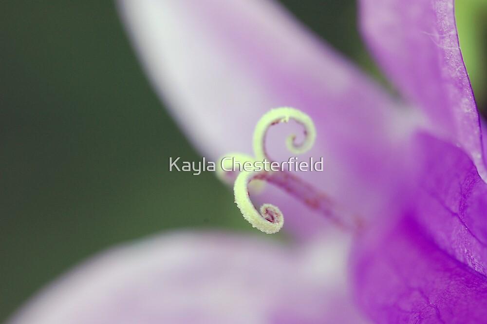 Softness by Kayla Chesterfield