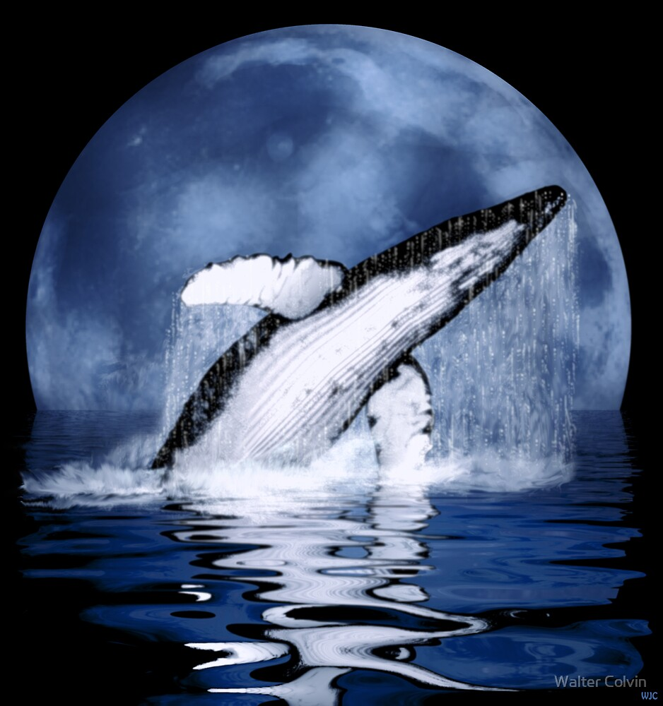 Humpback Whale by Walter Colvin