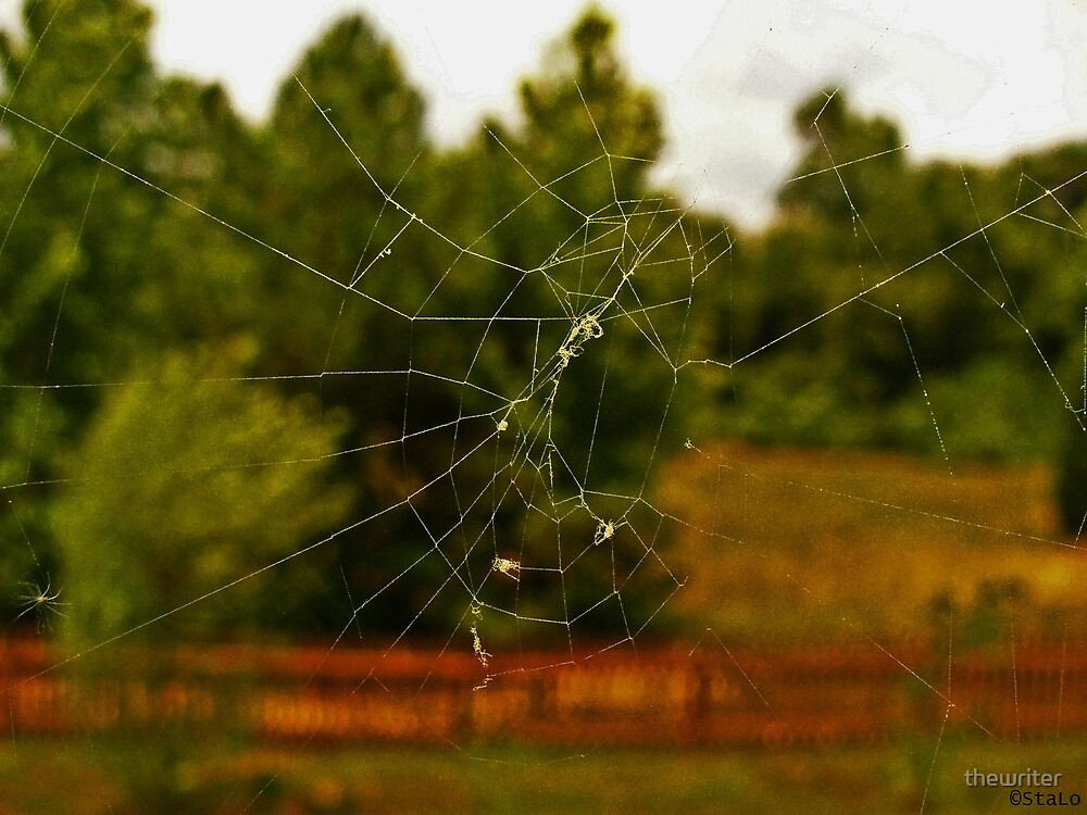 The Itsy Bitsy Spider by thewriter
