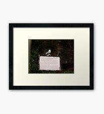 Kittiwake on sign Framed Print
