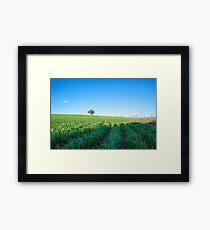 Crops...growing Dookie. Framed Print