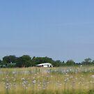Illinois farm land by mpeakclewett