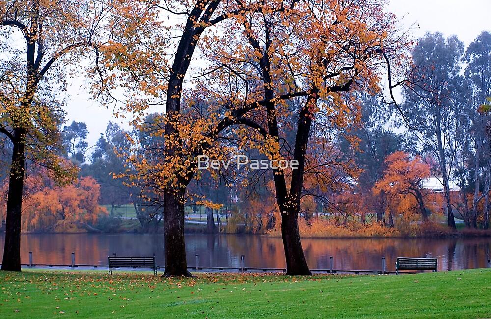 Autumn River View by Bev Pascoe