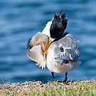 Least Tern 6138 by kevin chippindall