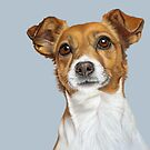 Jack Russell Terrier  by bydonna
