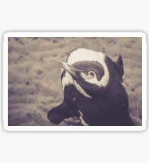 Adorable African Penguin Series 4 of 4 Sticker