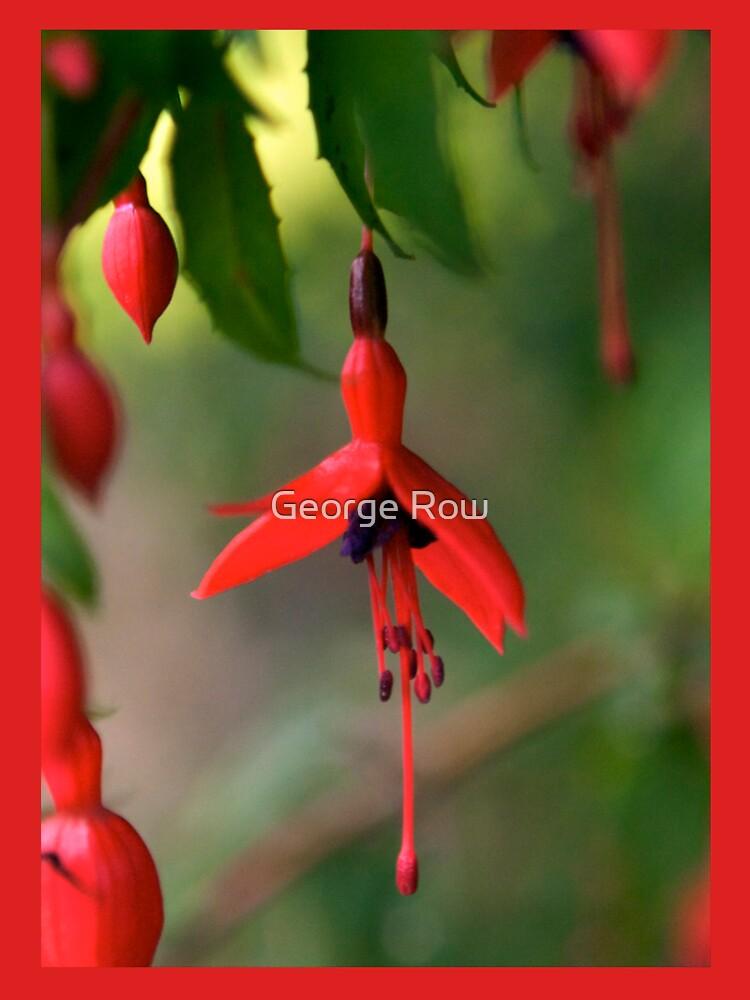 Single Wild Fuchsia Flower, Loch Na Fooey by VeryIreland