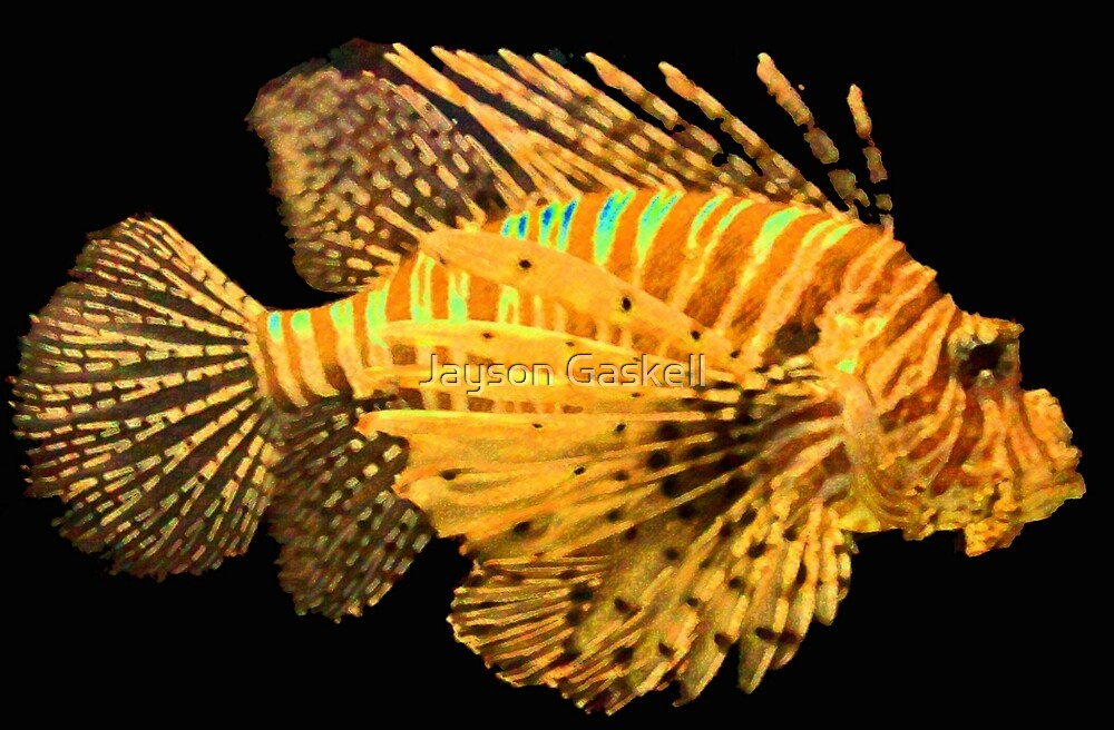 Lion fish by Jayson Gaskell