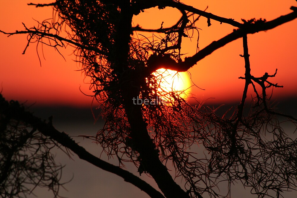 Spanish Moss at Sunset by Terri~Lynn Bealle
