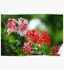 Blooming red flower on dark background  Poster