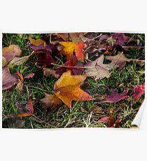 Red and Orange Autumn coloured leaves on green grass Poster