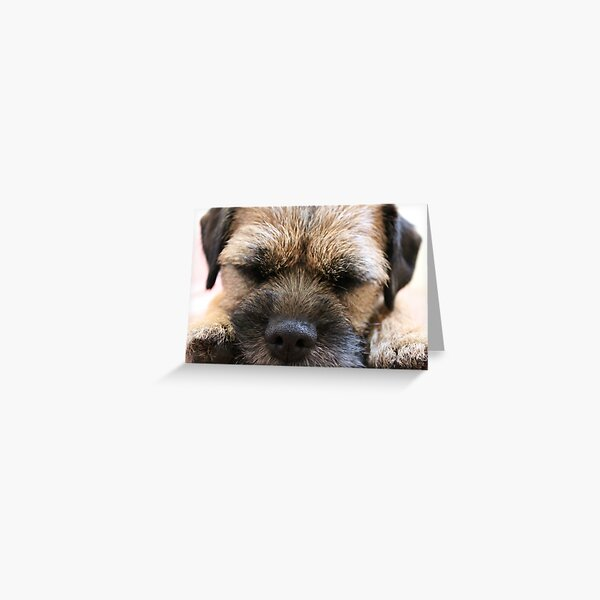 Border Terrier Gifts for Dog Lovers Whiskers & Paws Greeting Card