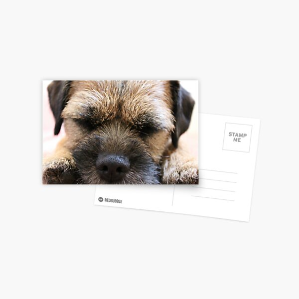 Border Terrier Gifts for Dog Lovers Whiskers & Paws Postcard