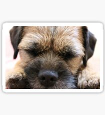 Border Terrier Gifts for Dog Lovers Whiskers & Paws Sticker