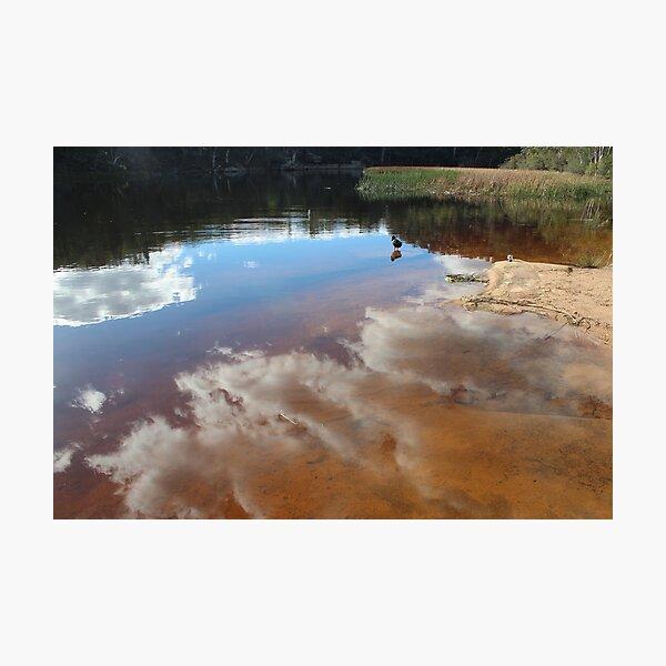 Contemplating Dunn's Swamp Photographic Print