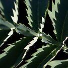 Leaves 2 by farmboy
